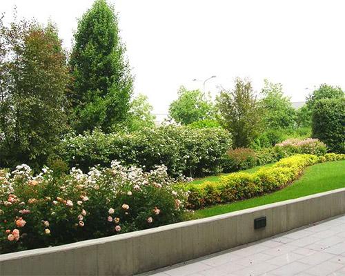 Guarda le foto delle piante ornamentali e da giardino maioli piante - Piante ornamentali da giardino ...