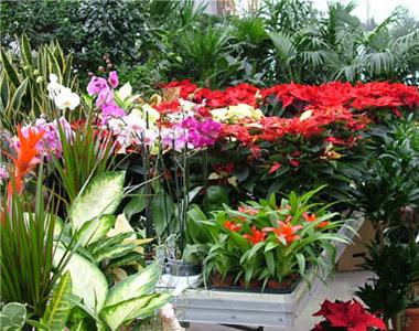 Prodotti - piante e alberi - piante da interno