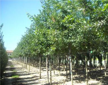 Nel vivaio c 39 una scelta di piante e accessori da giardino maioli piante - Migliori alberi da giardino ...